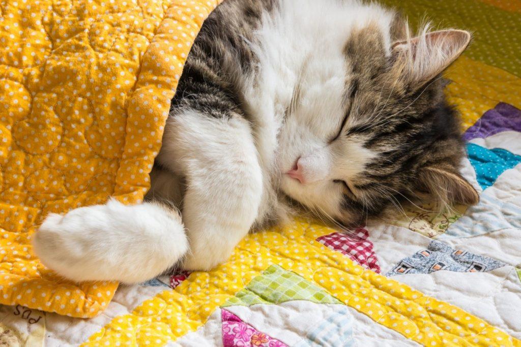 بچه گربه خوابیده